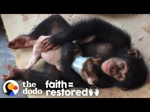 Dying Puppy Saved by a Vets Running a Chimp Shelter