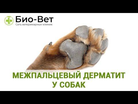 Межпальцевый Дерматит у Собак - Причины и Лечение // Сеть Ветклиник Био-Вет