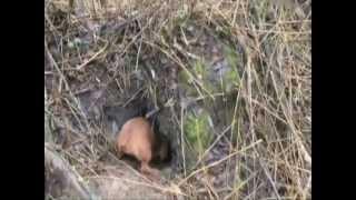Особенности охоты на руси 8: Охота в Пушкинских местах