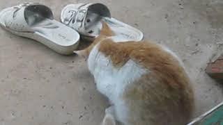 Умный кот Кеша