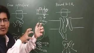 Concept Of Endomembrane System- Interesting Video