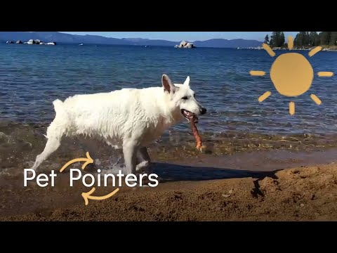 Dream Vacation | Pet Pointers