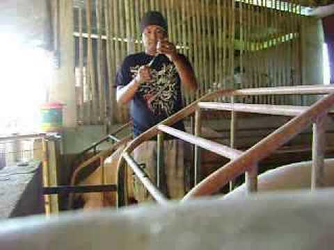 Mga larawan ng lahat ng uri ng parasito sa mga bata