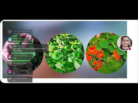 , title : 'Curso de Identificação de Plantas Medicinais