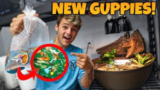 BUYING *NEW* COLORFUL GUPPY FISH for My indoor PATIO BOWL!!