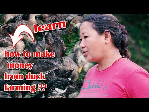 हास पालेर मनग्य आम्दानि \ पाल्न सके जति पनि बेच्न सक्छु - Duck farming in nepal