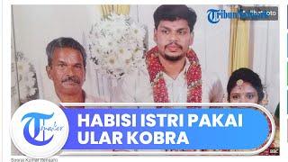 Diduga Incar Warisan Harta, Pria di India Tega Menghabisi Nyawa sang Istri dengan Ular Kobra