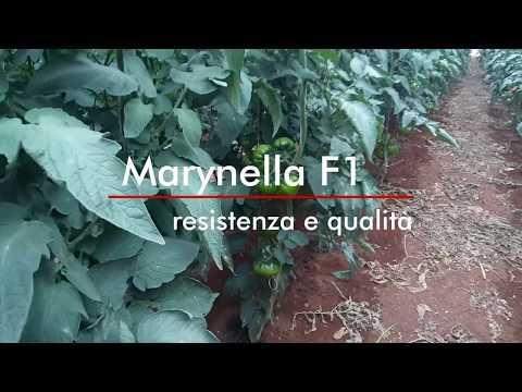 , title : 'Pomodoro Marynella F1