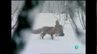 Escandinavia Salvaje - Capítulo 1 (Furia Vital)