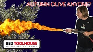 Ep157:Autumn Olive - The Scourge of the American Farm