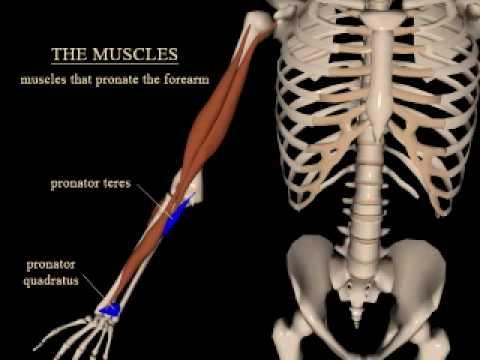 Eigenschaften der Kniegelenkserkrankungen
