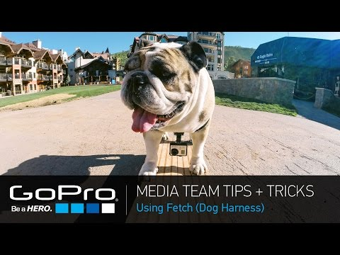 GoPro Media Team Tips And Tricks: Fetch (Dog Harness) (Ep 23)