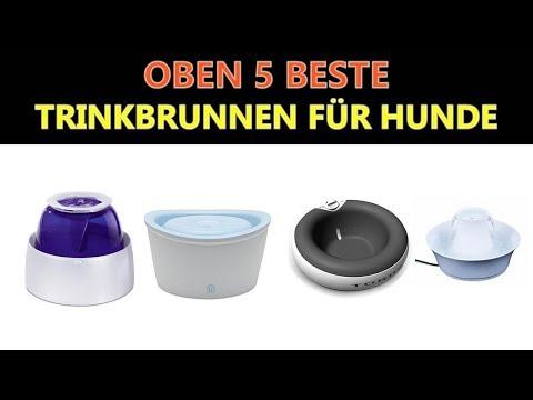Beste Trinkbrunnen für Hunde 2019