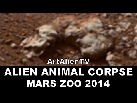 Mars Rover Animals 2014 - Pics about space