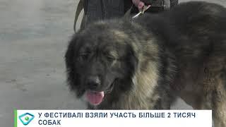 Більше 2 тисяч собак показали себе на міжнародному кінологічному фестивалі в Харкові