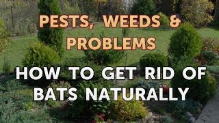 How to Get Rid of Bats Naturally