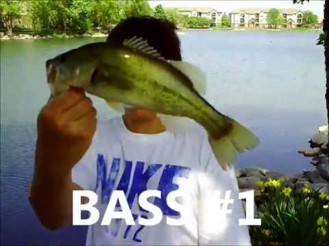 Mangler Lures: Bass Fishing with Crankbaits and Squidy