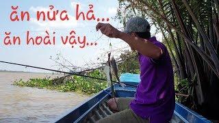 Ra sông cái thử bài mồi mới. Cá ăn không kịp nắn cục mồi thứ 2 | Săn bắt SÓC TRĂNG |