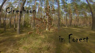 FPV Cinewhoop Cinematic shot in Forest. GoPro Hero 7 Black #Cinewhoop #FPV #GoPro #Cinematic