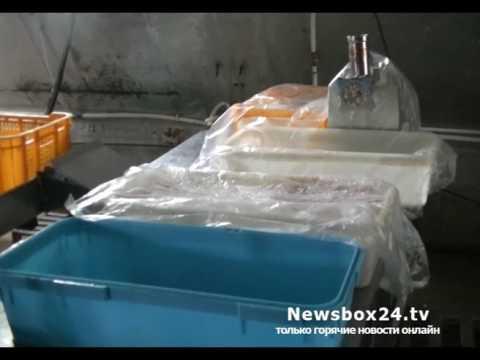 Более 2 тонн просроченной рыбы изъято на владивостокском рыбоперерабатывающем предприятии