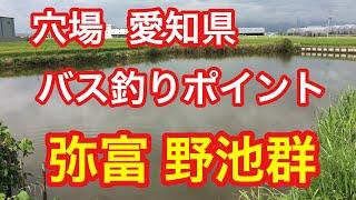 弥富野池群愛知県穴場バス釣りポイントブラックバス