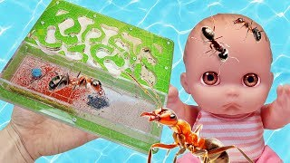 Пупсики Открывают Посылка с Муравьями Муравьиная ферма Ant Planet Обзор Видео для Детей Зырики ТВ