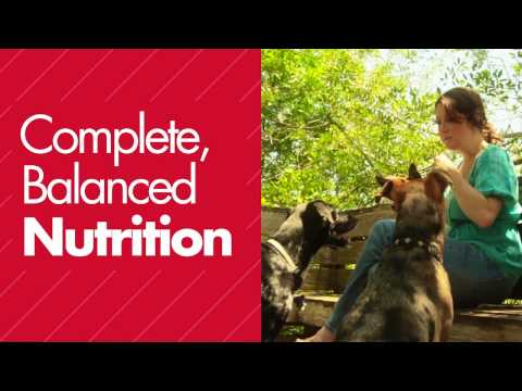 Video Immune System Support for Dogs: Stella