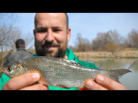 Colori unimpalcatura per pesca