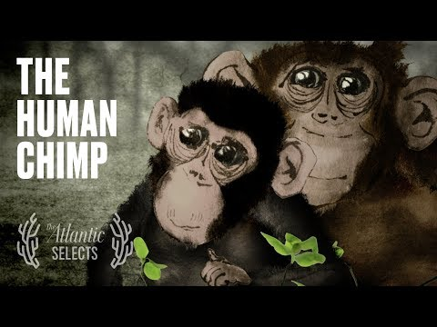 The Chimp Who Believed She Was Human