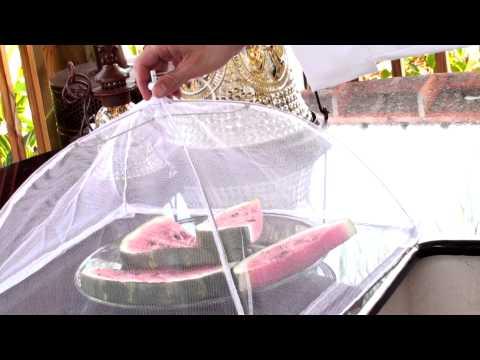 Charcoal Companion Mesh Food Tent