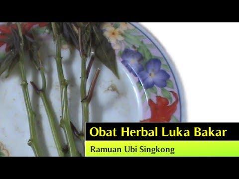 Video Obat Luka Bernanah - Obat Herbal untuk Luka Bernanah dari Tanaman Obat Herbal Singkong