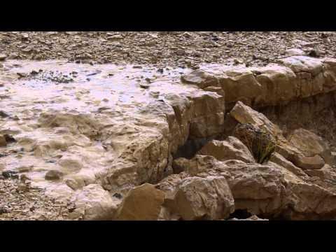 טיול במעלה תוואי נחל פרס המוצף שבנגב