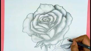 Dibujos Paso A Paso Aprende  A Dibujar Una Rosa A Lápiz
