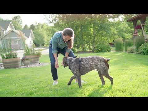 Mighty Paw Vehicle Dog Harness