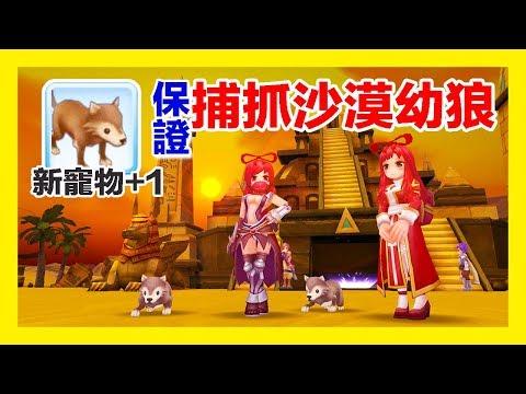 RO 仙境傳說  收服小狼狗!保證抓取寵物的測試~第五隻寵物沙漠幼狼get!