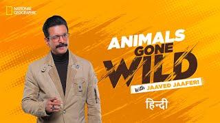 Animals Gone Wild with Jaaved Jaaferi Trailer
