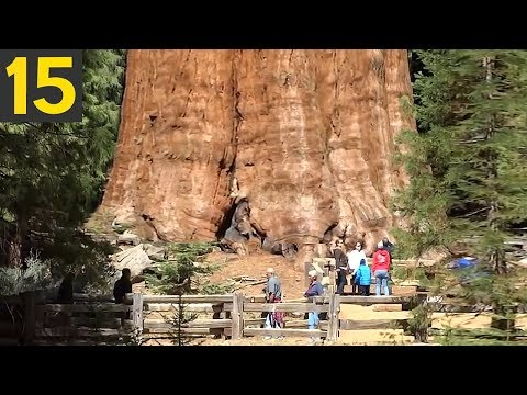 These Size of These 15 Enormous Trees Will Shock You