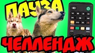 ПАУЗА ЧЕЛЛЕНДЖ (Хаски Бублик) Говорящая собака Мистер Бубл