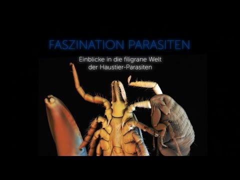 Die Parasiten des Darmkanales die Liste