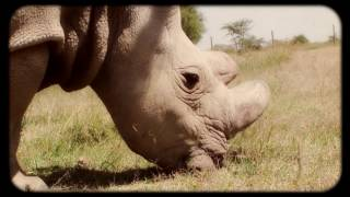 Download Kenyan Boys Choir Jambo Bwana Mp3 and Video MP4