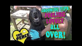 How To Groom A Dog - Percy The Black Labrador Retriever