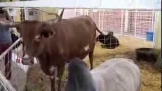 Texas State Fair in Under Three Minutes