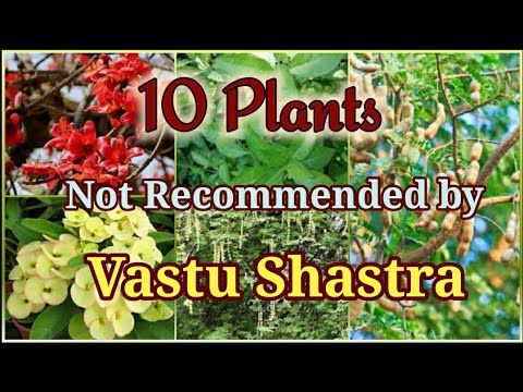 , title : '10 Plants that are not Recommended by Vastu Shastra to grow at Home