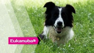 Sheepdog and young handler compete - Part 1 | Extraordinary Dogs