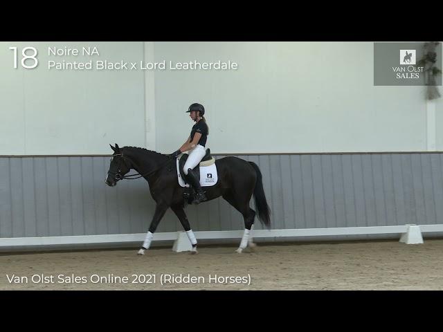 Noire NA under saddle