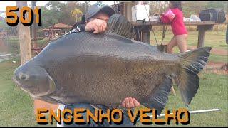 Os Gigantes do Engenho Velho - Fishingtur na Tv 501