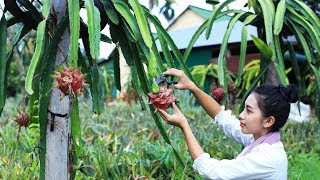 Cooking dessert Dragon fruit in my homeland - Polin Lifestyle