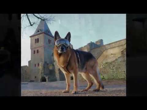 Mit der Rex Specs Hundebrille auf Burg Frankenstein