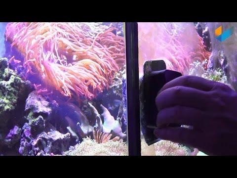 JBL Floaty Blade L Scheibenreiniger Aquariumcleaner | Review | Meerwasser Live TV