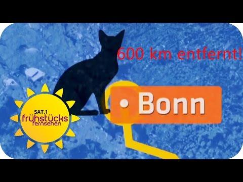 Katze wiedergefunden nach 13 MONATEN! | SAT.1 Frühstücksfernsehen